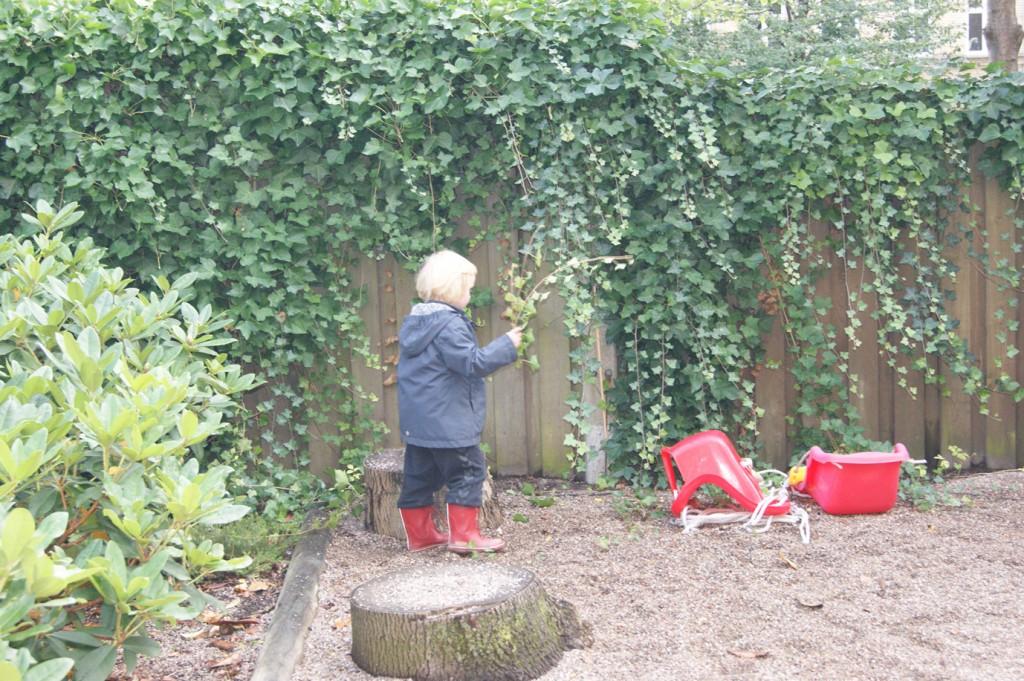 En ung havearbejder inspicerer efeuen.